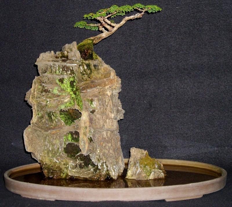 Root on Rock hinoki cypress....a few years Ror_hi12