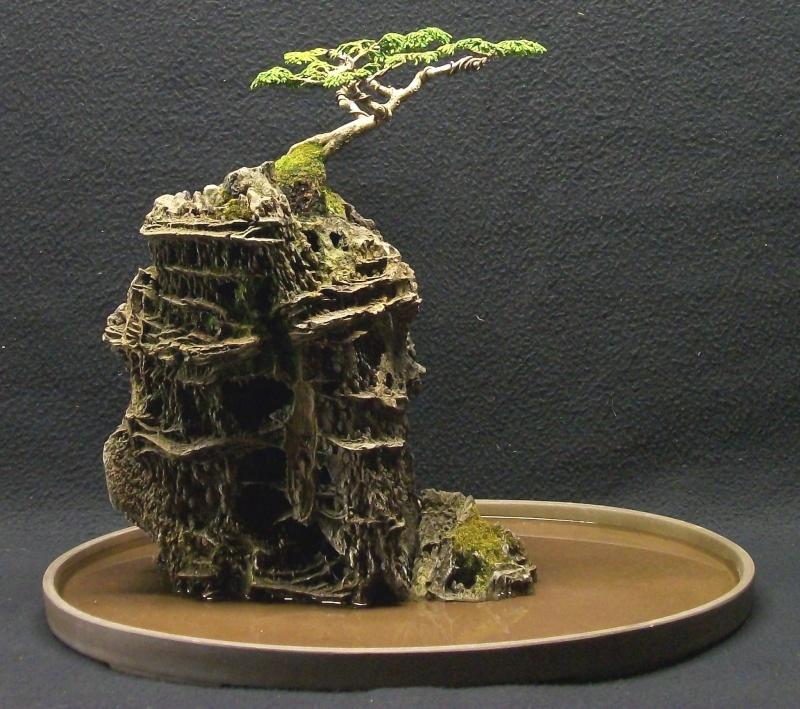 Root on Rock hinoki cypress....a few years Ror_hi13
