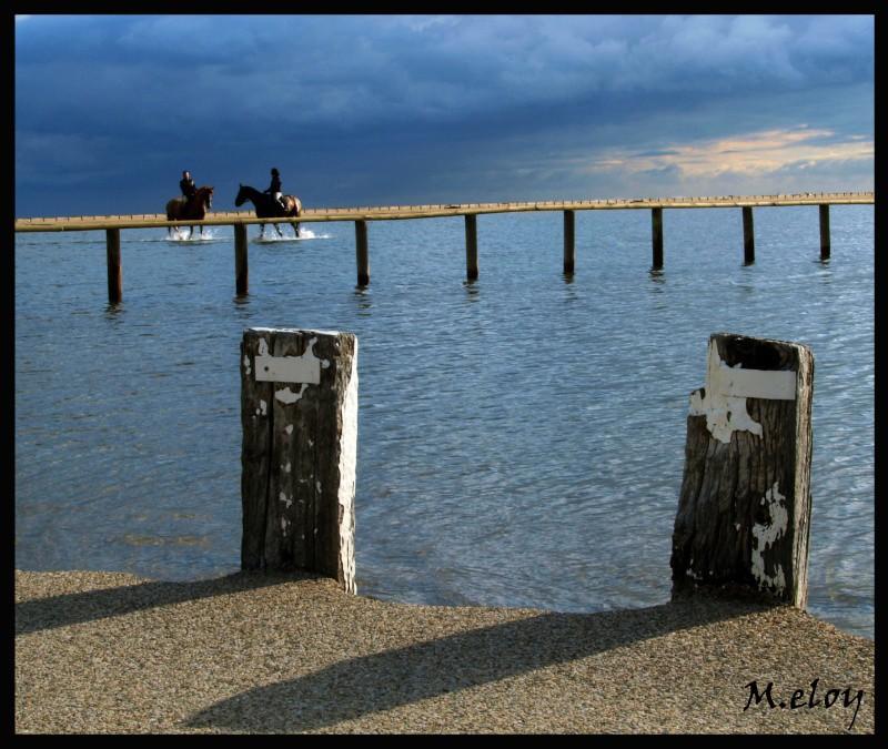 Vos plus belles photos du mois de février 2009 Chevau11
