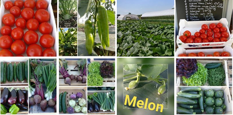 p25. ST-GEORGES sur ARNON - Les Jardins de La Prêle - Légumes, oeufs et plants Presle10