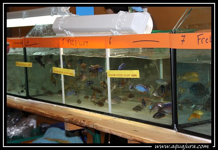 Photo de la bourse de l'Association Comtoise d'Aquariophilie du 07/03/10 Img_8415