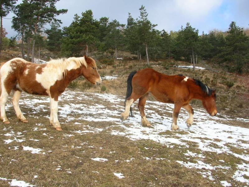 Voyage à cheval ... de plusieurs mois ... Dscn6114