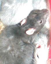 Les animaux Img02710