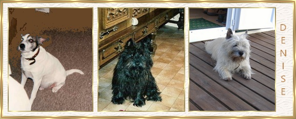 Chanel- cairn terrier  3 ans Bannie10