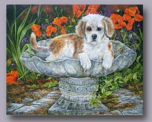Belles images d'animaux 45d81d10