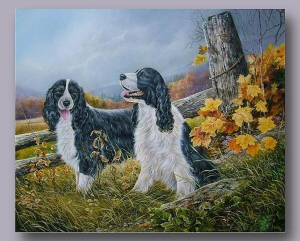 Belles images d'animaux 6772a110