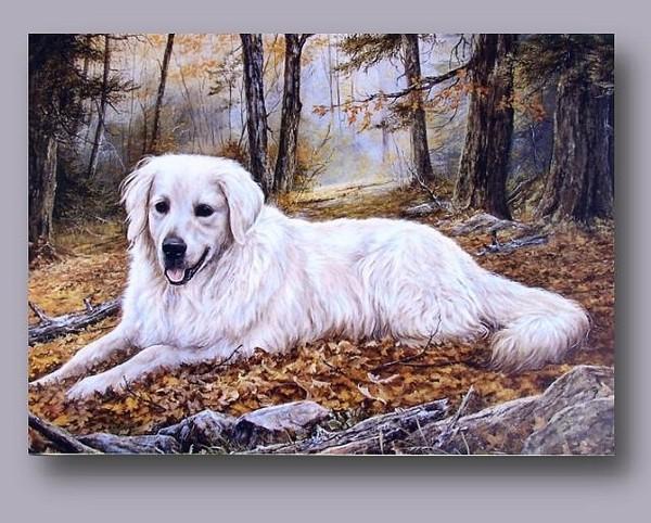 Belles images d'animaux 848a3210