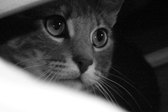 Belles images d'animaux Attent10