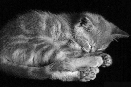 Belles images d'animaux Dormeu10