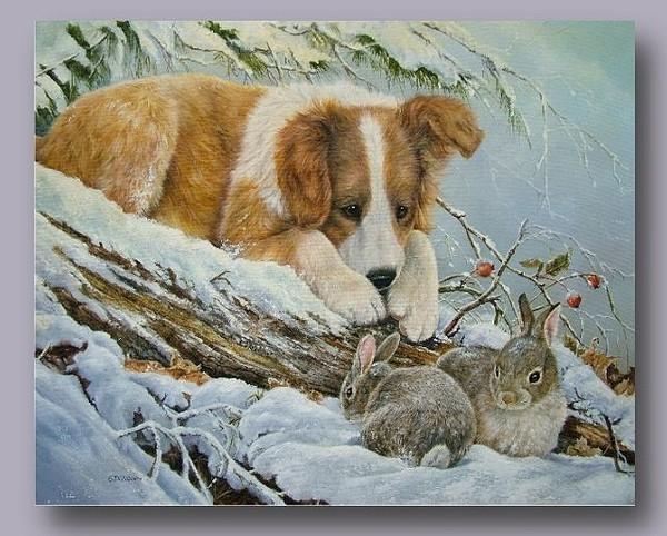 Belles images d'animaux Ecade810