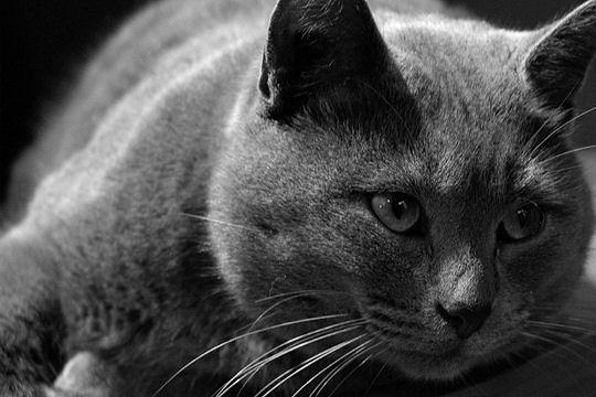 Belles images d'animaux Intrig10