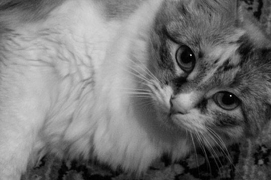 Belles images d'animaux Nostal10