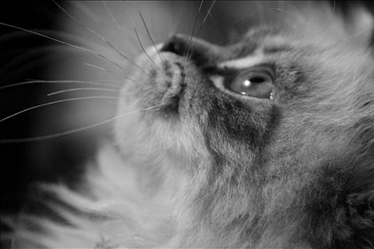 Belles images d'animaux Perple10
