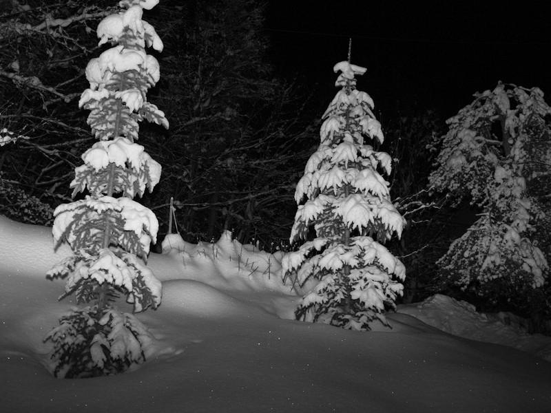neige de velours P1112911