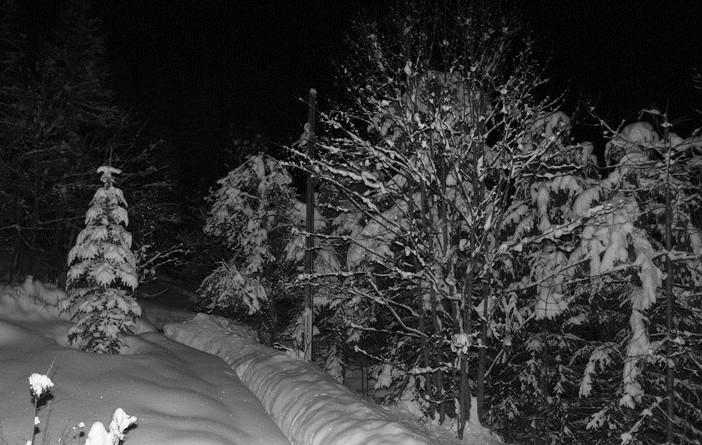 neige de velours P1112912