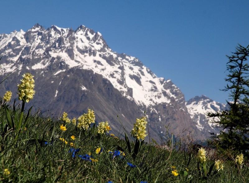 Vos plus belles photos du mois de juin 2010 P6047410