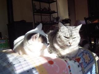 Témoignage  retour du chat Fin_ja11