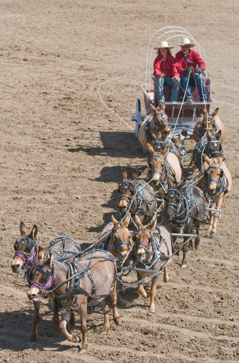 Bishop Mule Days - Californie 32515_10