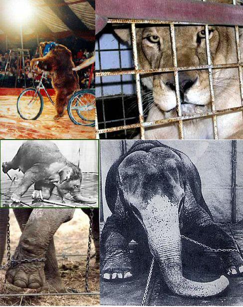 Manif. contre le cirque Pinder, les 18 & 21 Dec. à Paris 23314810