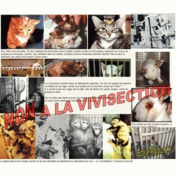 02 avril 2011 : Stop Animaux de Labos - Montpellier. 80693410