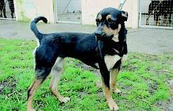 Une petite chienne avait été laissée pour morte Rchoup10