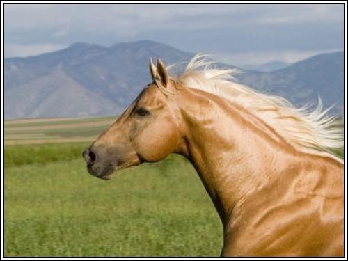 """• Mission """"création de chevaux"""". - Page 4 Quarte10"""