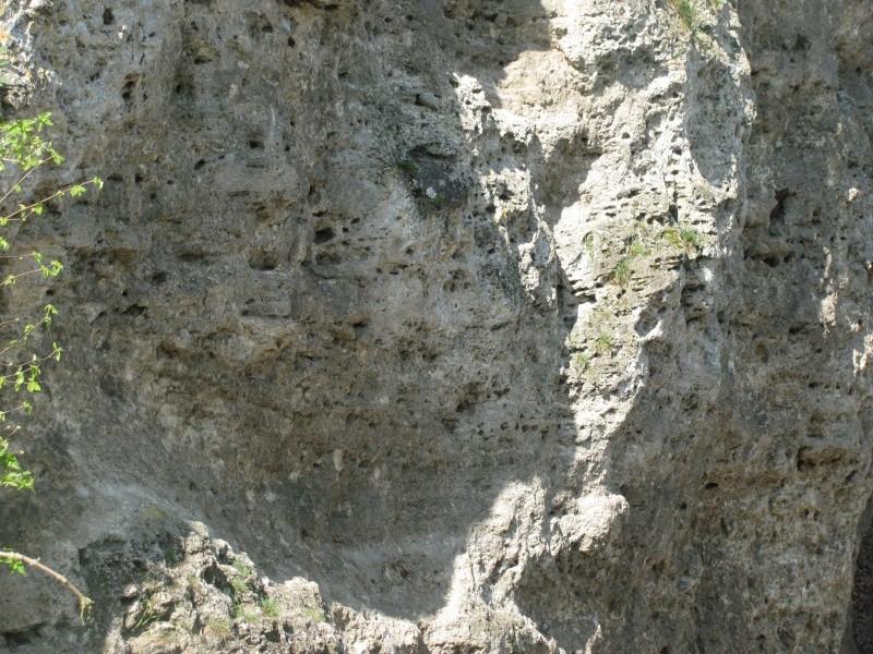 Calcaire à trous Img_0610