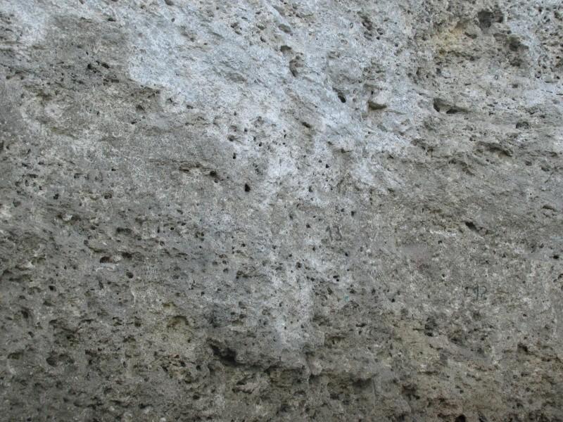 Calcaire à trous Img_0612