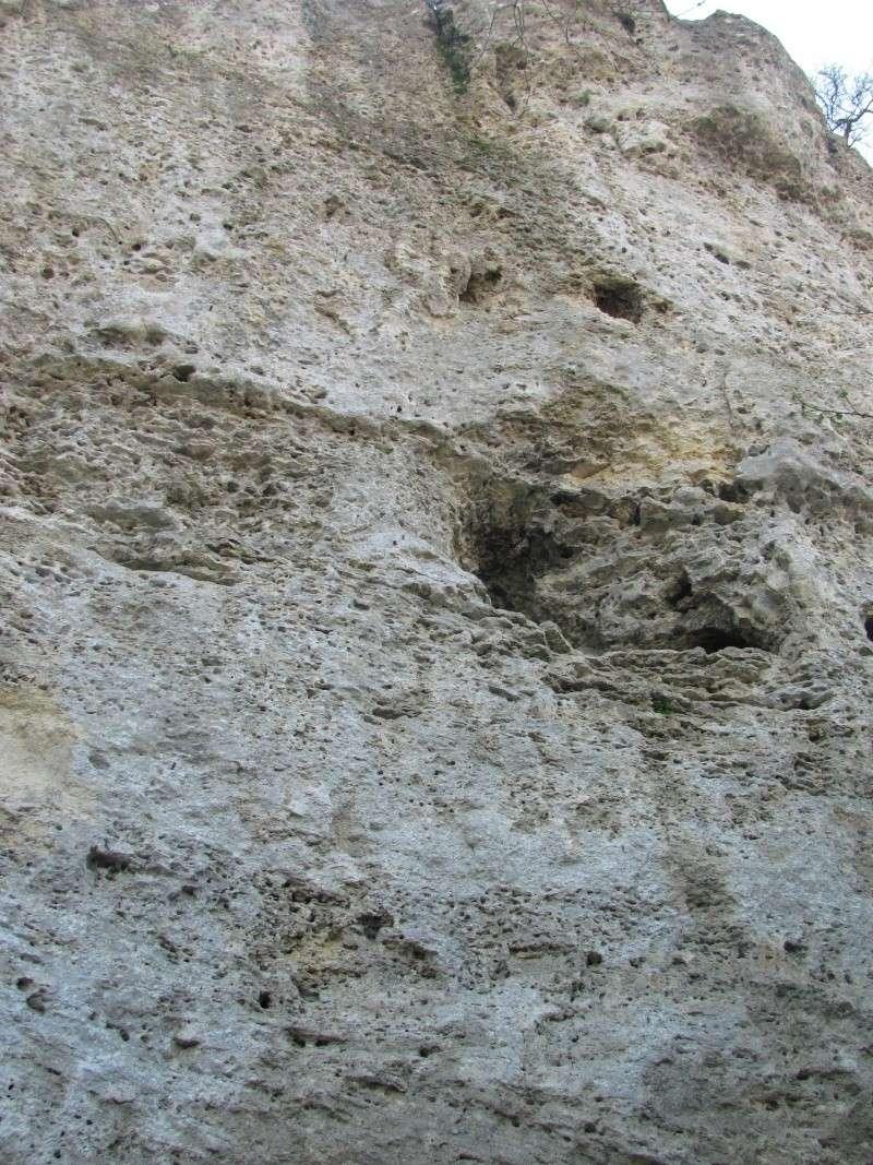Calcaire à trous Img_0613