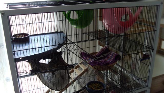A vendre 2 cages (06, 83..) Dsc02717