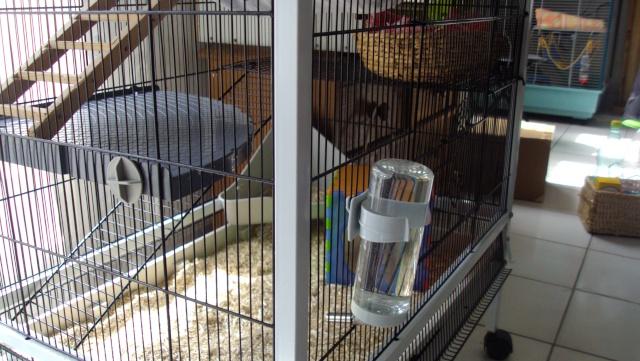 A vendre 2 cages (06, 83..) Dsc02820