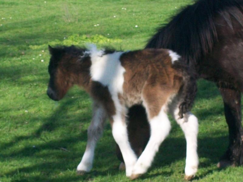 un nom pour un poney 301_0611