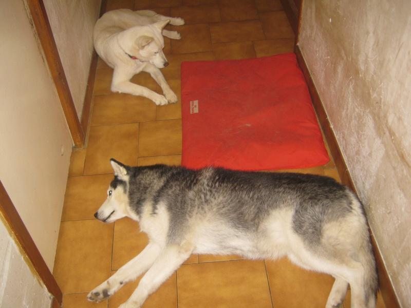 Les loulous qui dorment Tipsie12