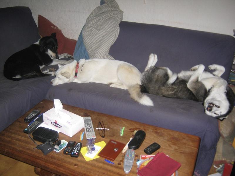 Les loulous qui dorment Tipsie13