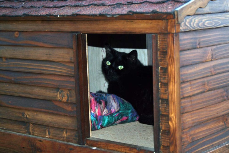 Chalet pour (gros) Chat - Page 5 Enfin210