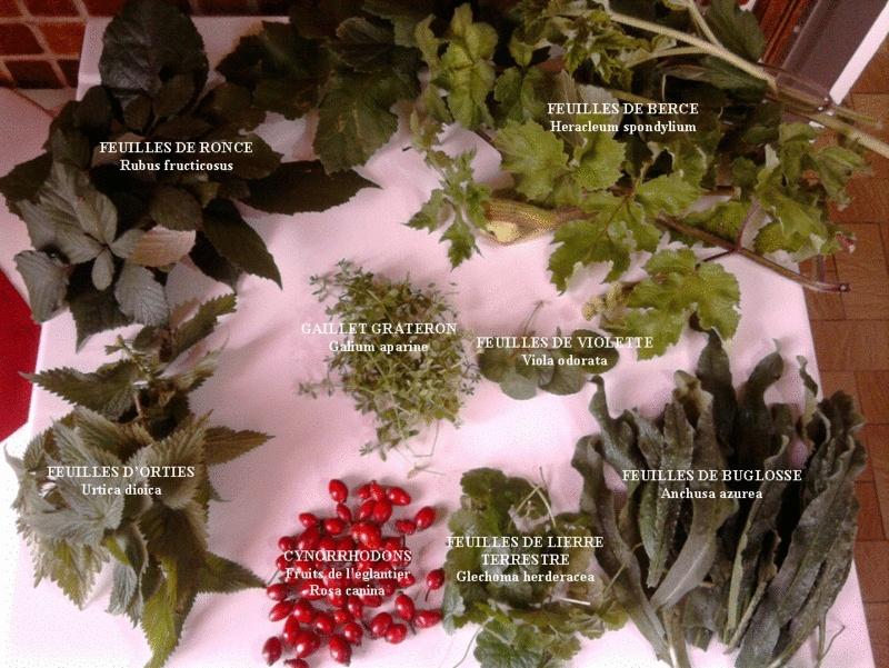 En novembre, une récolte et un repas complet ! Compos10