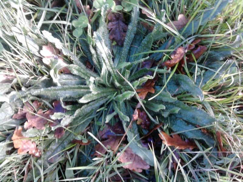 En novembre, une récolte et un repas complet ! Photo032