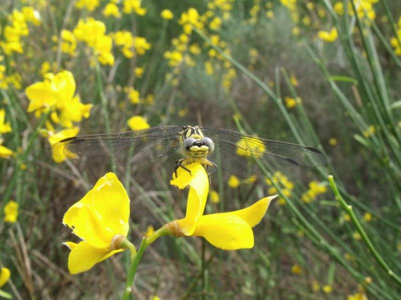 la nature en PACA 2010_014