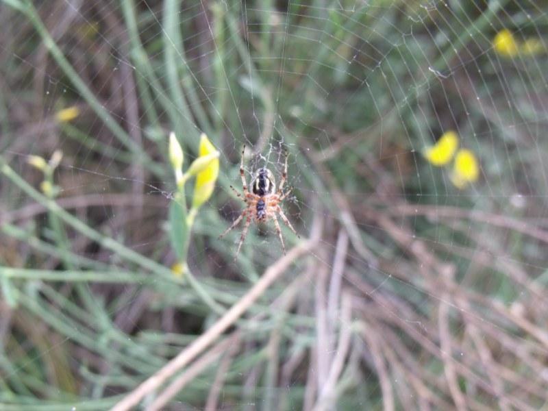 la nature en PACA 2010_015