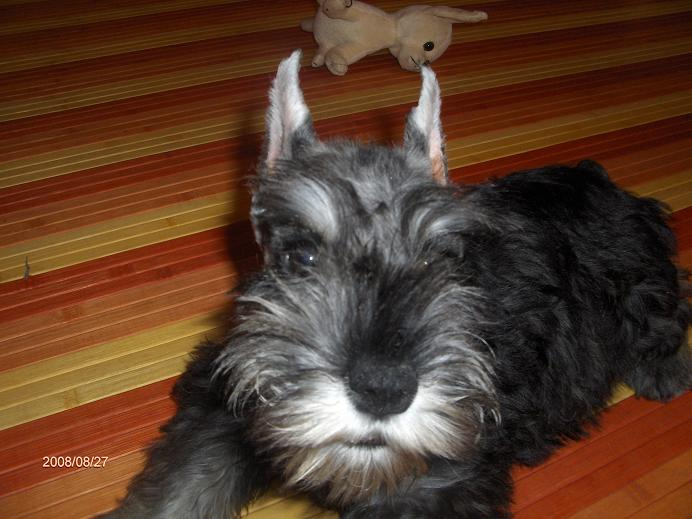 "DOG OTHO'S DIVINA  ""Dolche"" Hpim5011"