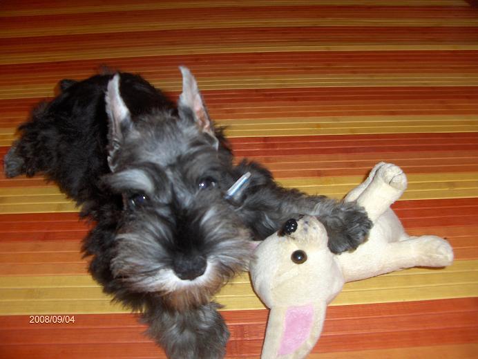 "DOG OTHO'S DIVINA  ""Dolche"" Hpim5012"