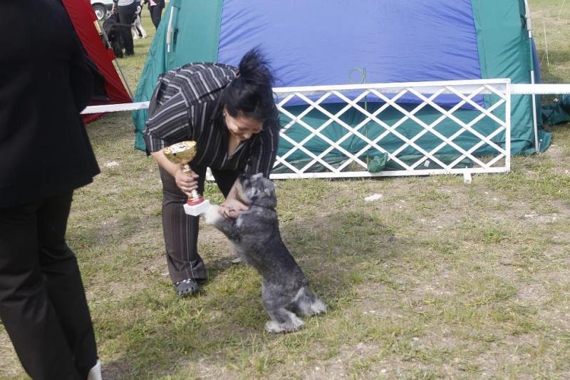 "DOG OTHO'S DIVINA  ""Dolche"" Kap_3111"