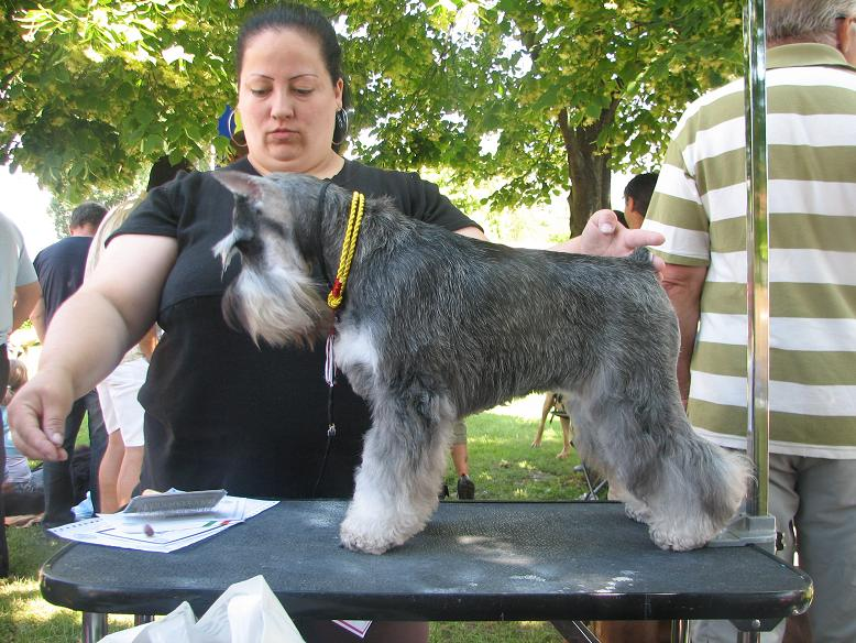 "DOG OTHO'S DIVINA  ""Dolche"" Kap_3120"