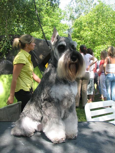 "DOG OTHO'S DIVINA  ""Dolche"" Kap_3121"