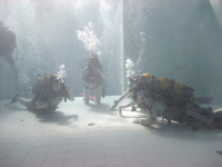 NEMO 33 - Sunday 7th March Nemo2_39
