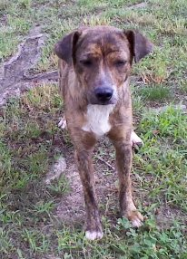 Oliver - a dog in desperate need of a home... Jpeg_r12