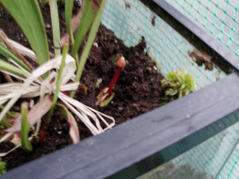 J'ai une fleur... [Maj 19-06-10]Elle fanne! [31/12/10] Question,Proposition S_alat10