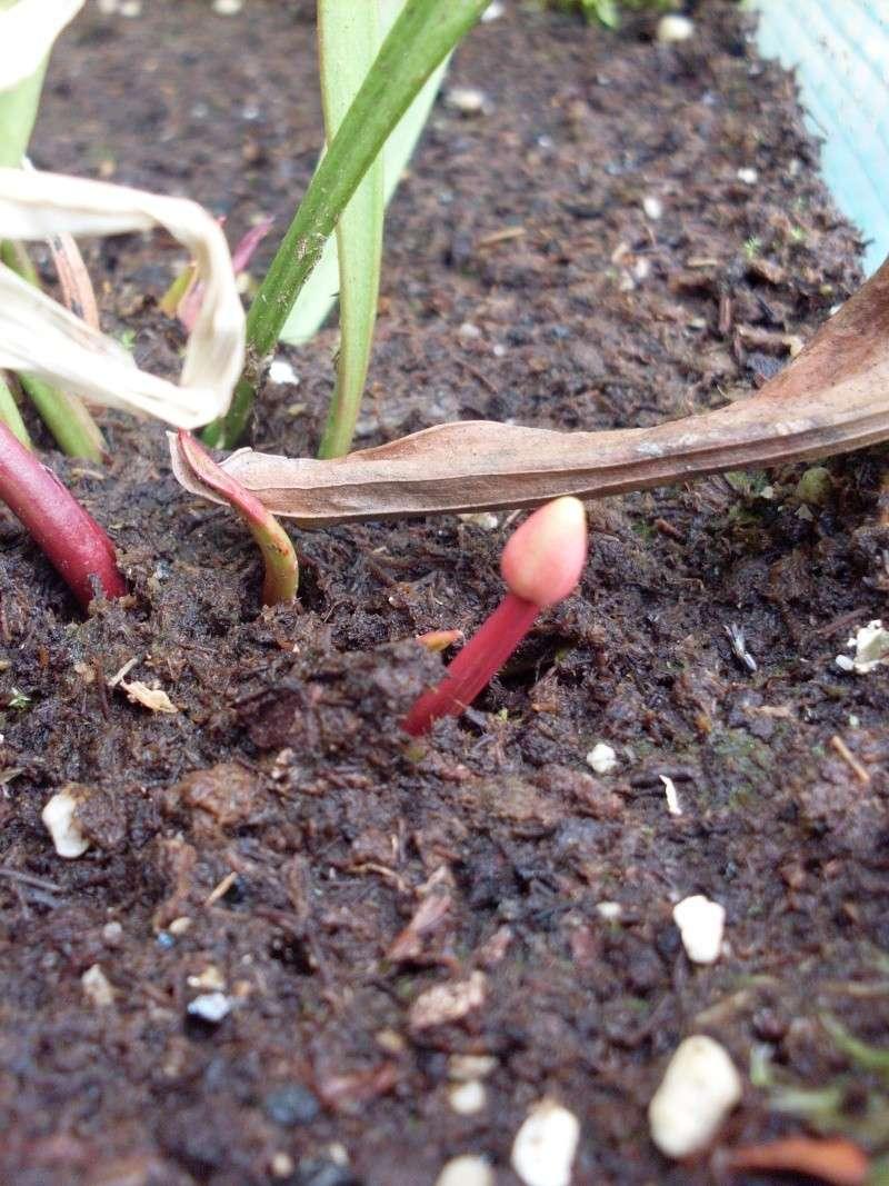 J'ai une fleur... [Maj 19-06-10]Elle fanne! [31/12/10] Question,Proposition Sdc16211