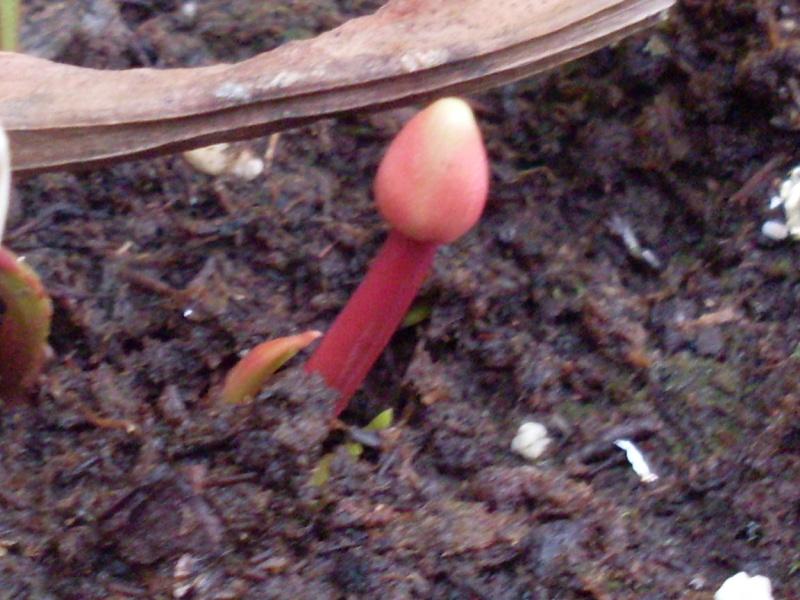 J'ai une fleur... [Maj 19-06-10]Elle fanne! [31/12/10] Question,Proposition Sdc16240