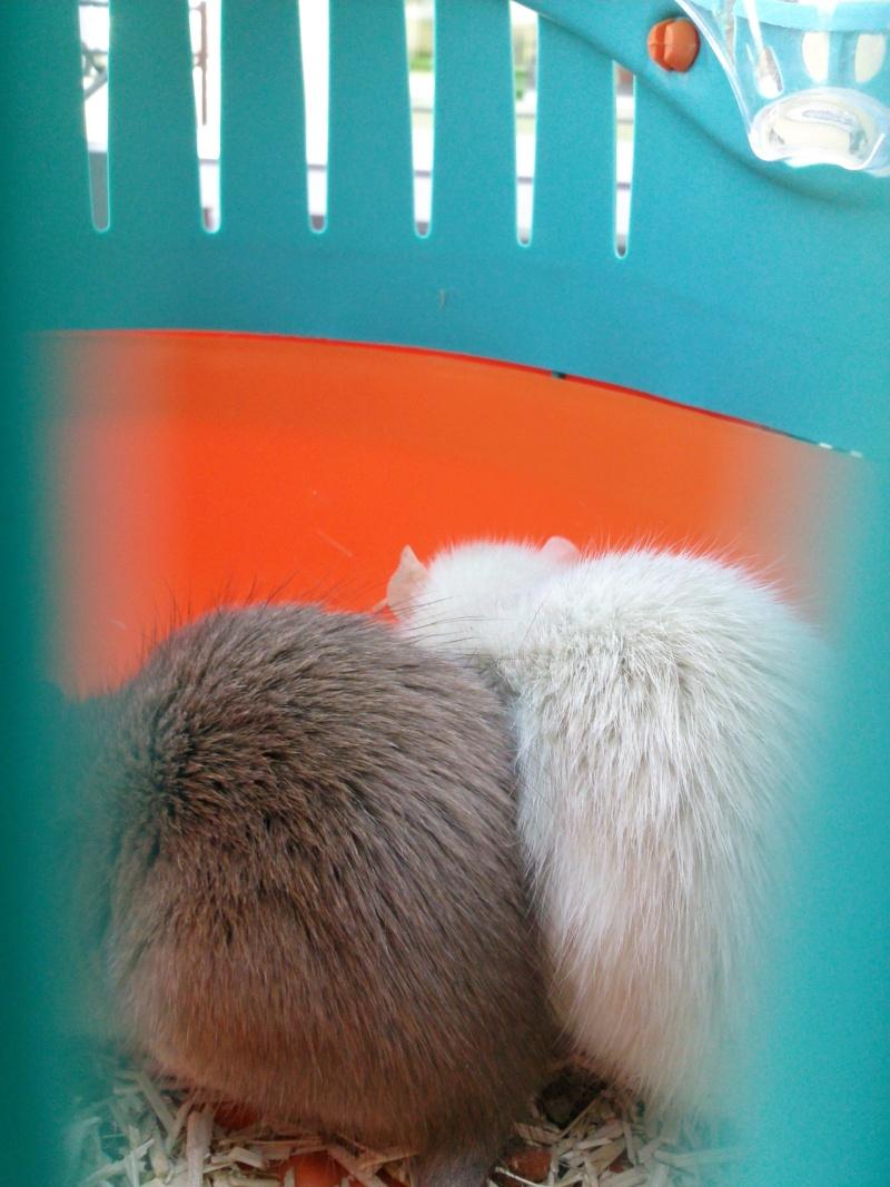 Aide pour les couleurs svp  Photo012
